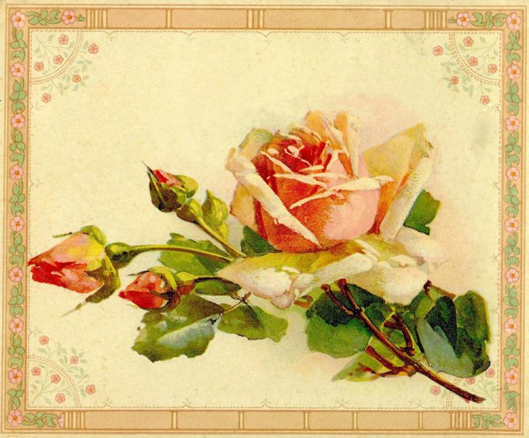 Рисовать цветы на открытку