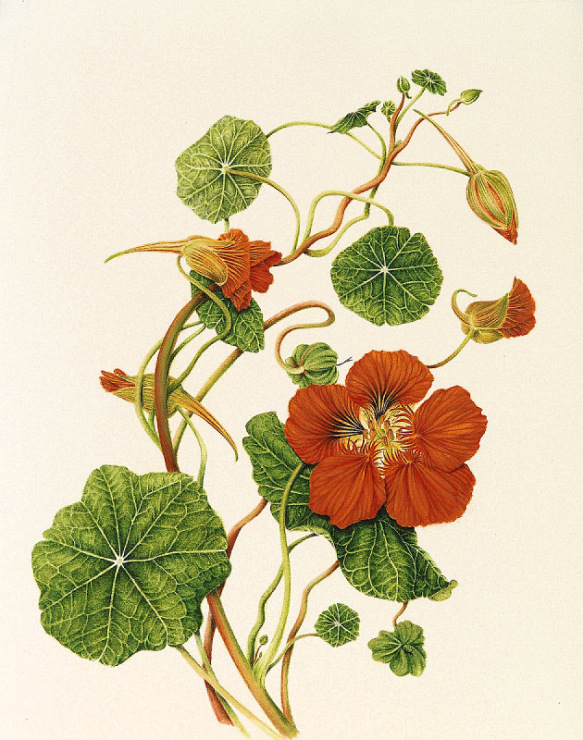 Media-cache-ak0pinimgcom majus (coltunasi) seeds flowering plants seeds pintere