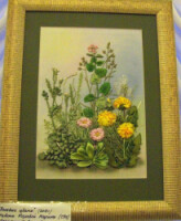 Вышивка лентами полевые цветы схемы